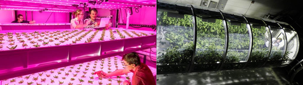 Controlled plant growth studies at UA CEAC